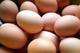 brahma kip eieren krielkippen