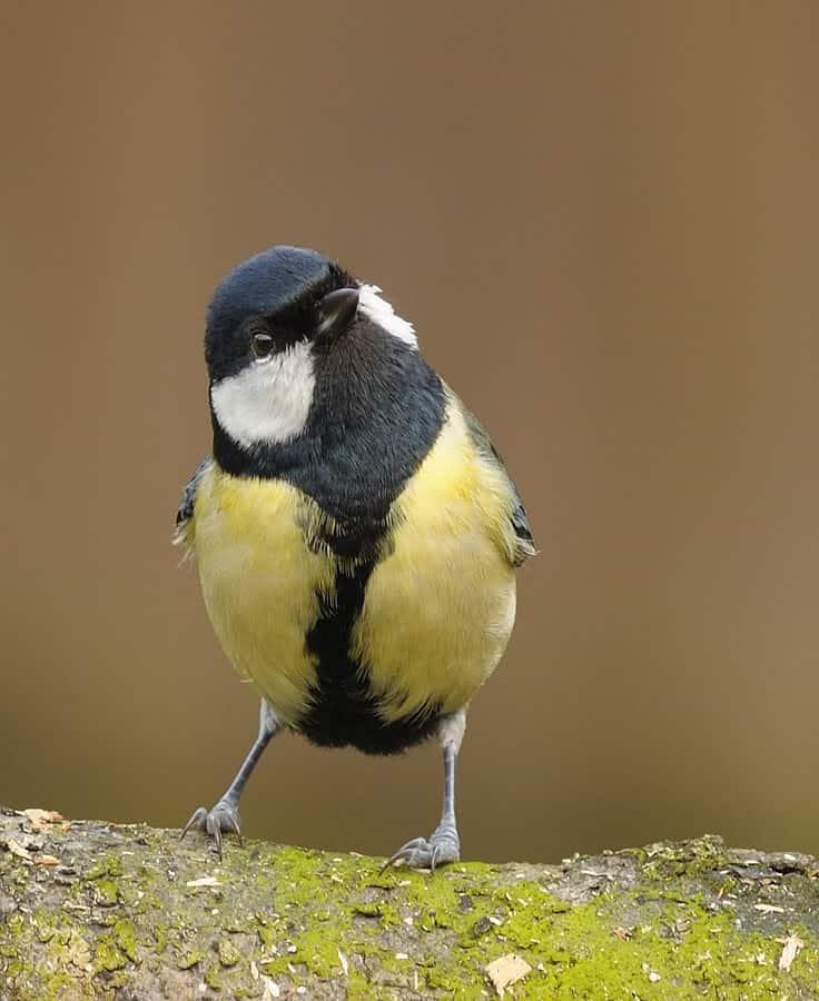 vogelhuisje maken vogels in de tuin