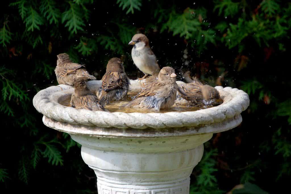 vogelhuisje maken water voor vogels