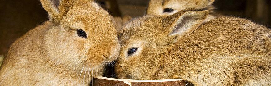 konijnenhok buiten maken bouwtekeningen