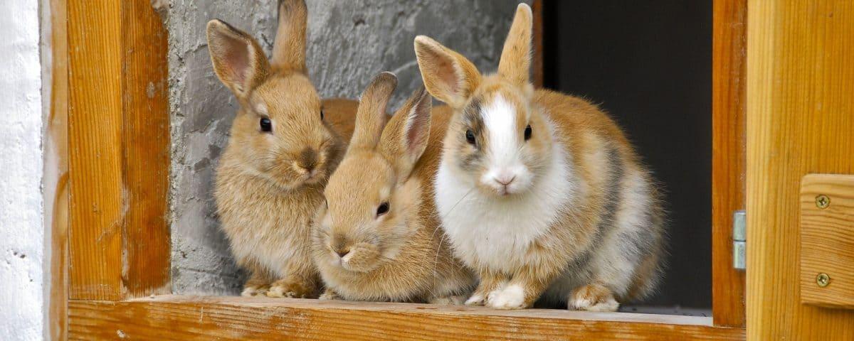 konijnenhok binnen goedkoop