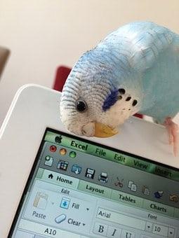 voliere bouwen voor papegaai tekening
