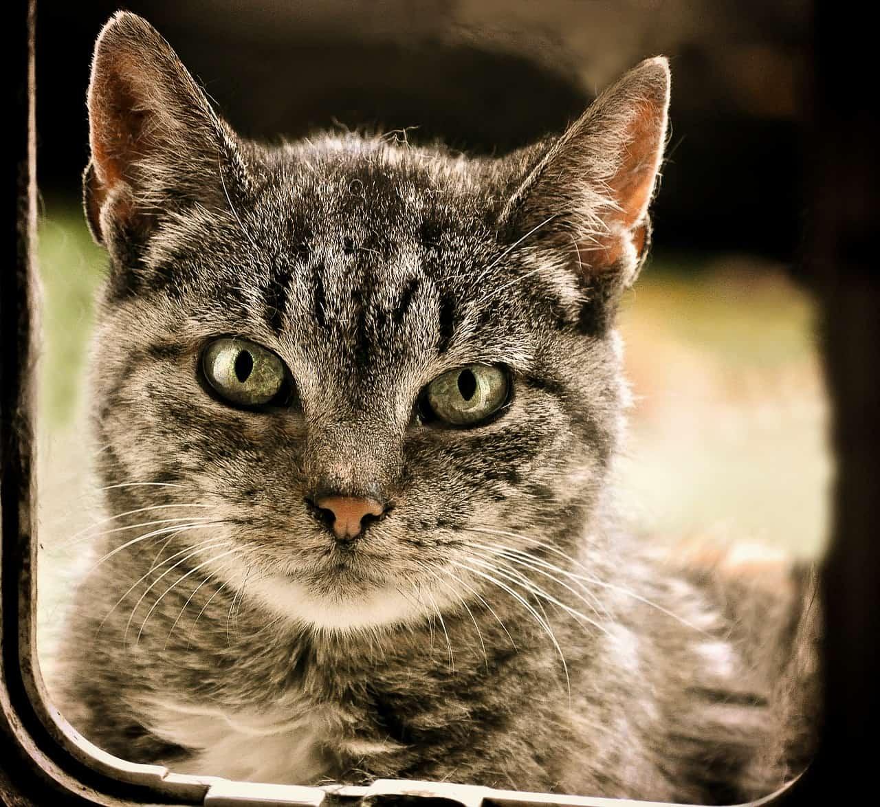 Kattenluik plaatsen stappenplan