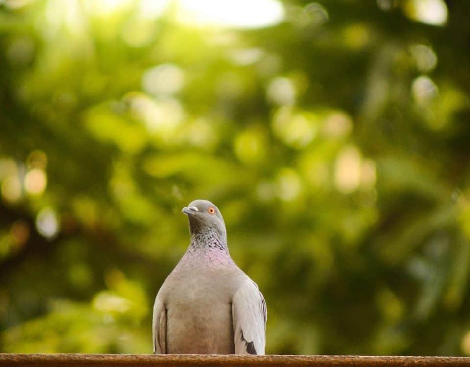 klein duivenhok bouwen met een bouwtekening