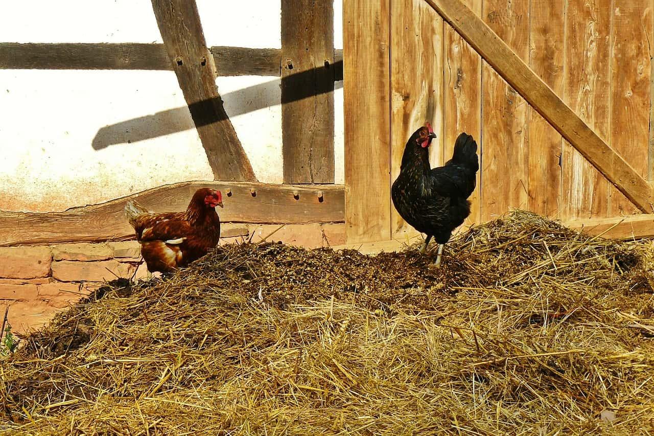nestmateriaal voor in leghok kippen